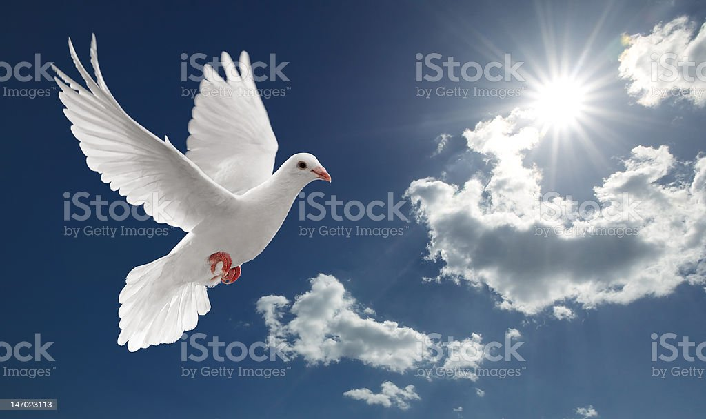 dove in the sky royalty-free stock photo
