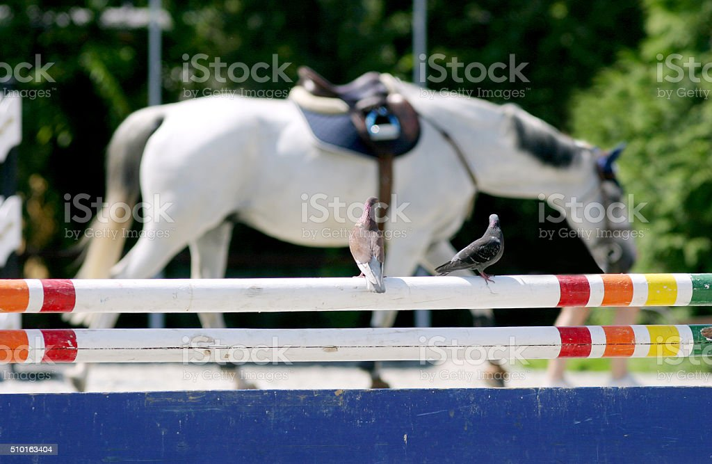 Dove on hurdle at a horse race track stock photo