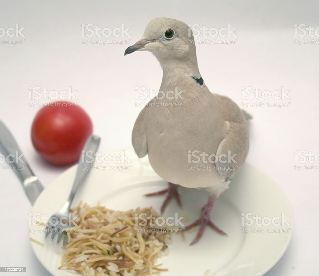 dove raw with rice royalty-free stock photo