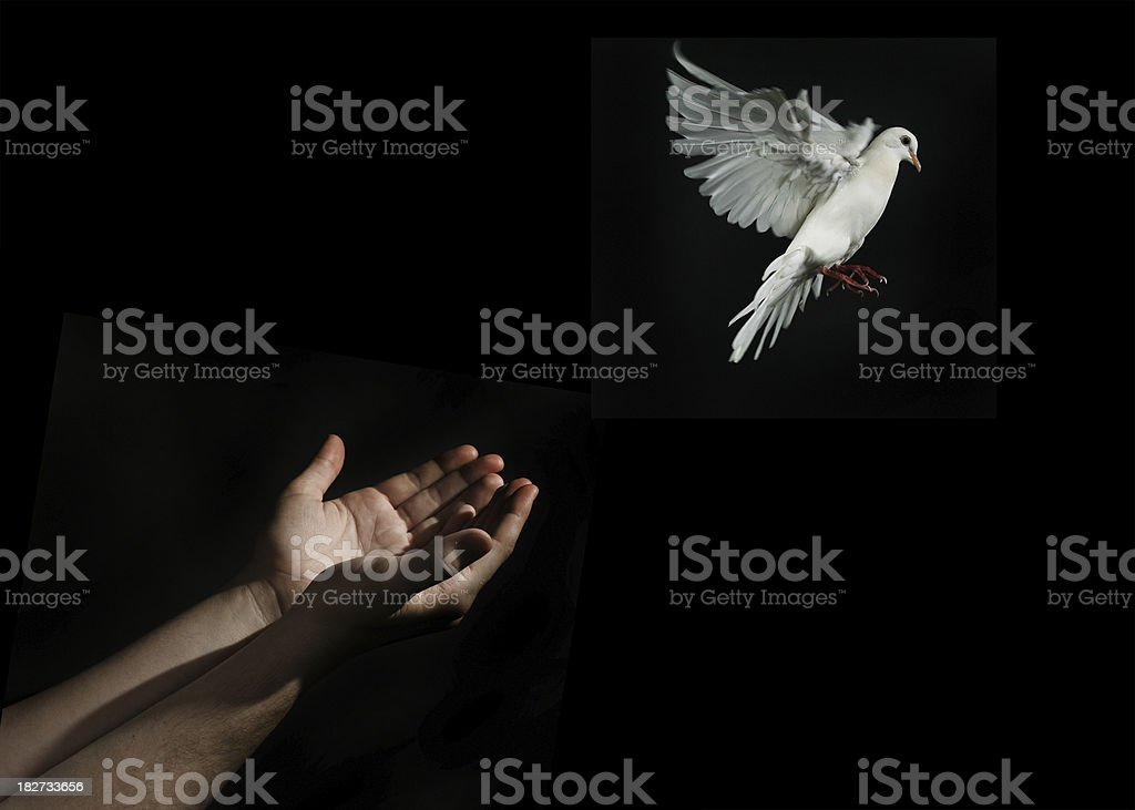 Dove Release royalty-free stock photo