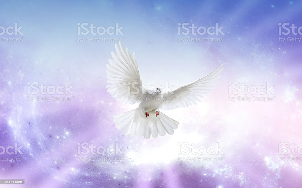 A Dove representing the Holy Spirit stock photo