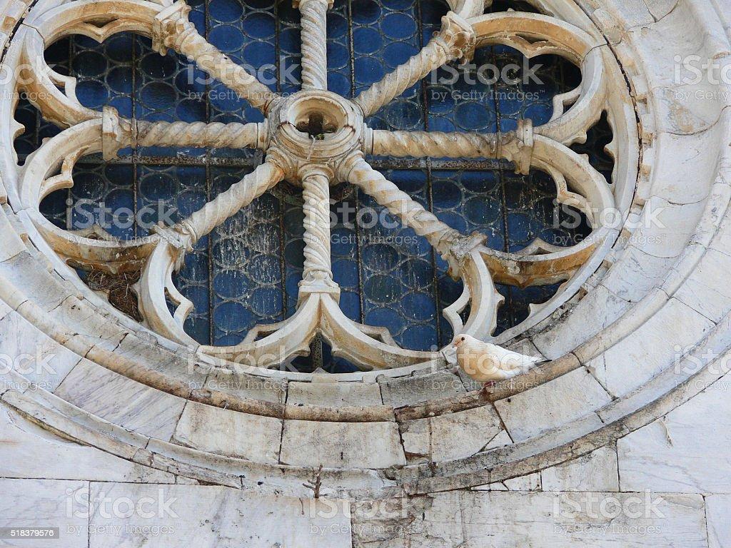 Dove resting on  old rose window of romanesque church valdicastello stock photo