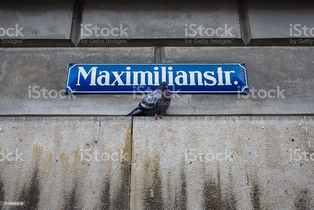 Dove under street sign stock photo