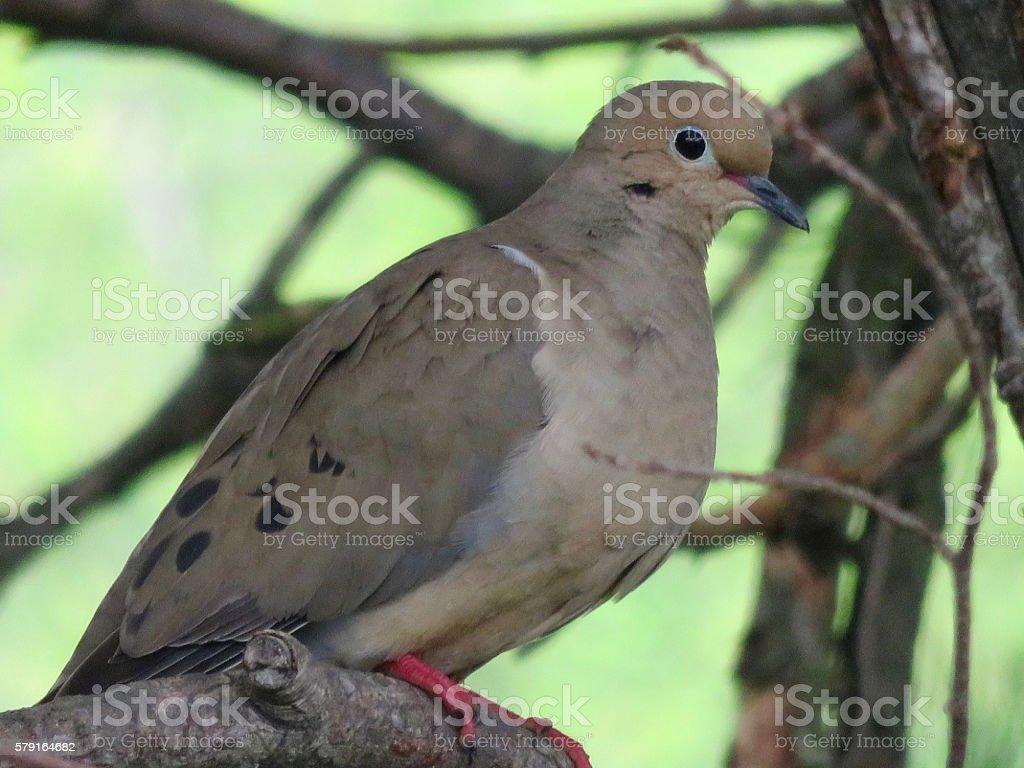 Dove Watching stock photo