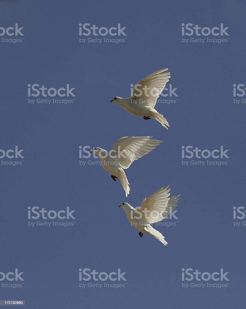 Doves in formation royalty-free stock photo