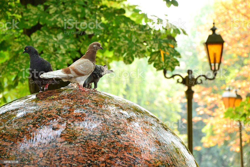 Doves on a fountain in park in front of autumn trees stock photo