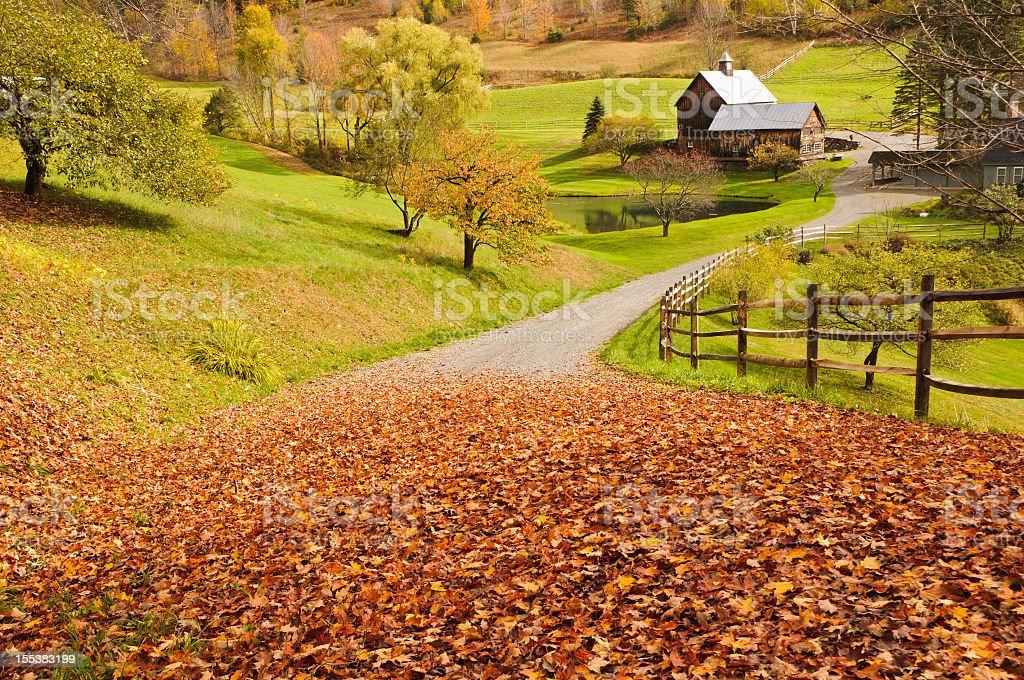 Down a Leafy Lane stock photo
