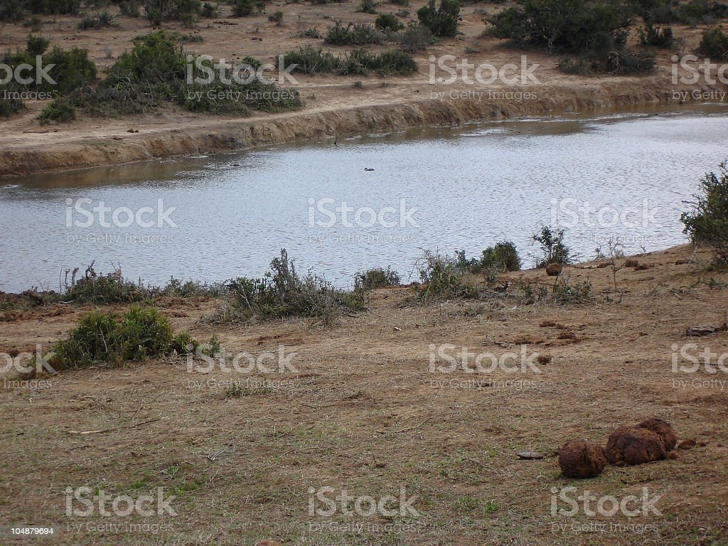 Down at the watering hole. stock photo