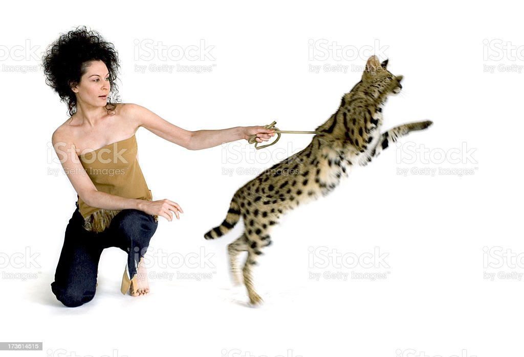 Down, Kitty! royalty-free stock photo