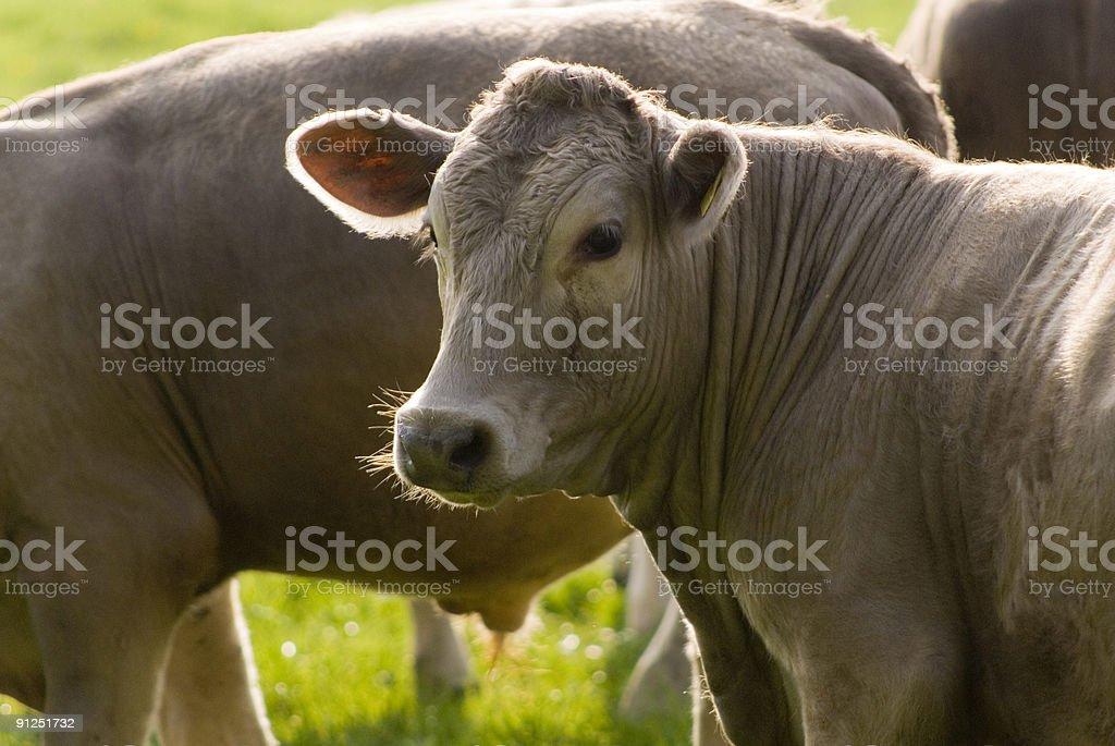 Down on the farm. royalty-free stock photo