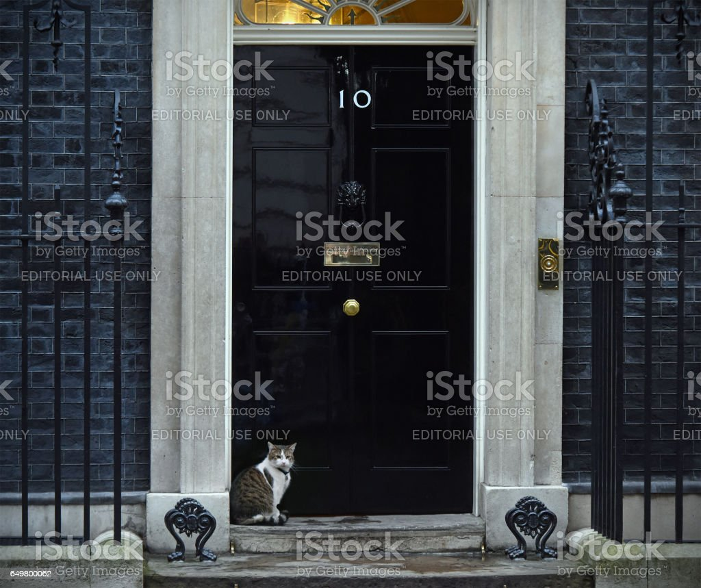 Downing street cat stock photo