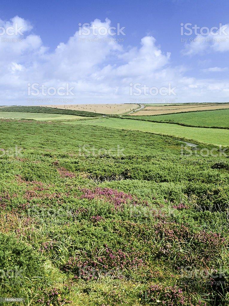 downland stock photo