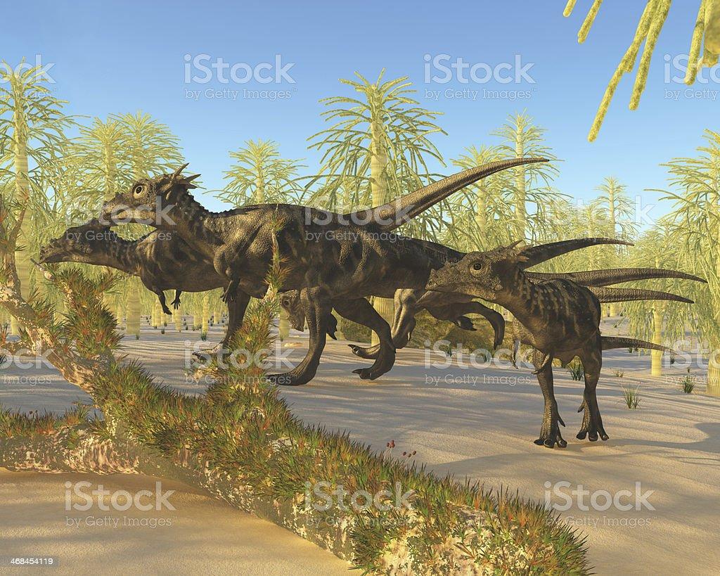 Dracorex stock photo