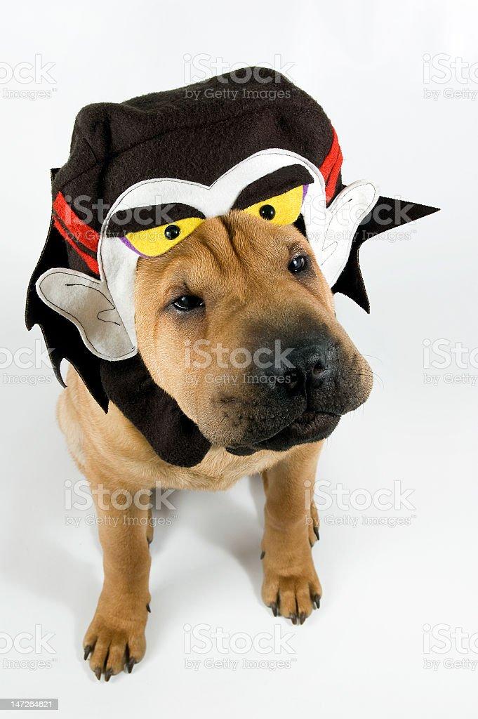 Dracula Puppy stock photo