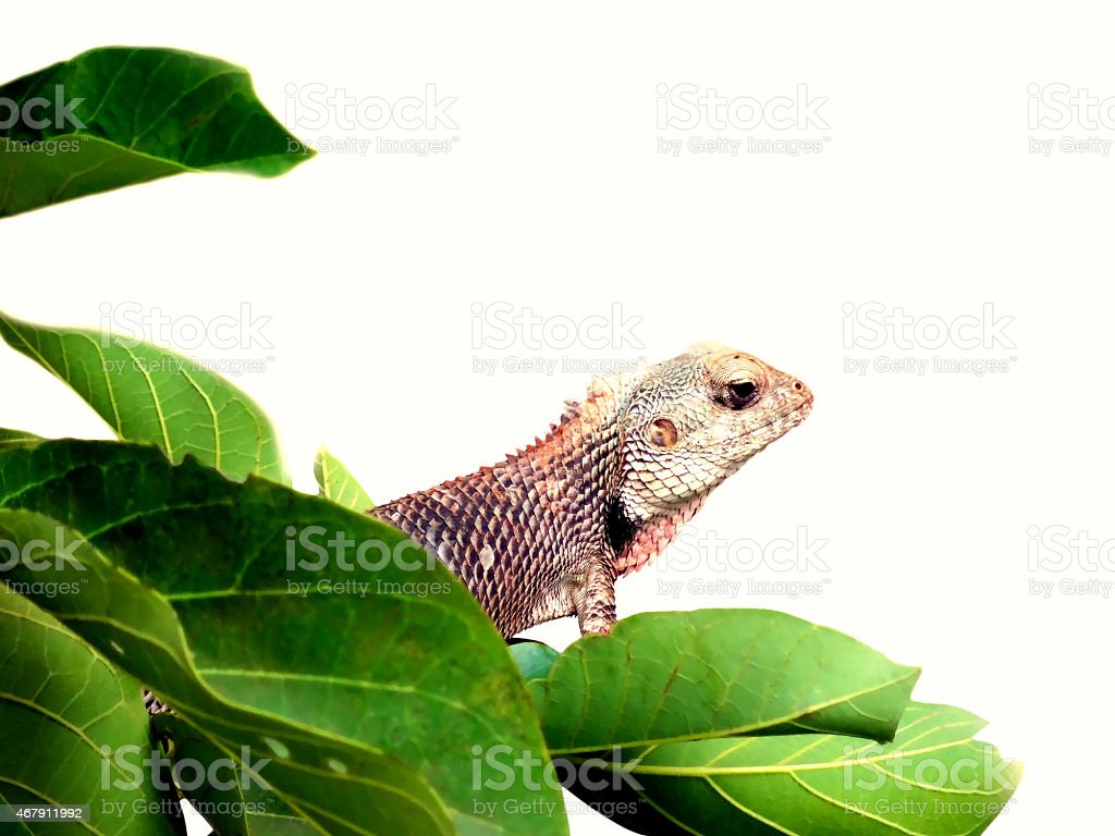 Dragon lizard cartooned stock photo