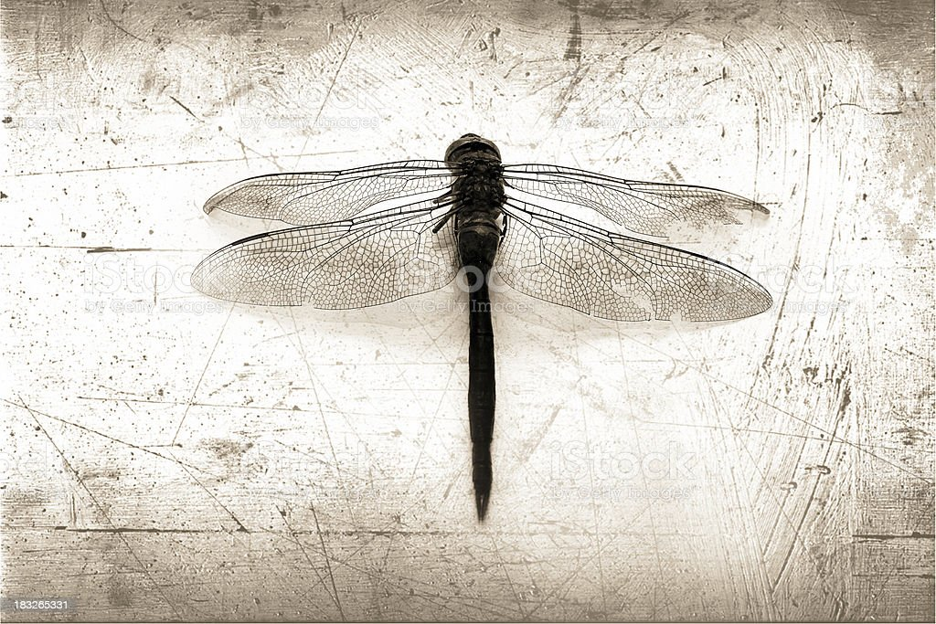 dragonflew grunge royalty-free stock photo