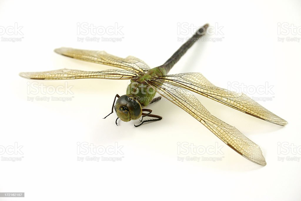 dragonfly 2 of 3. royalty-free stock photo