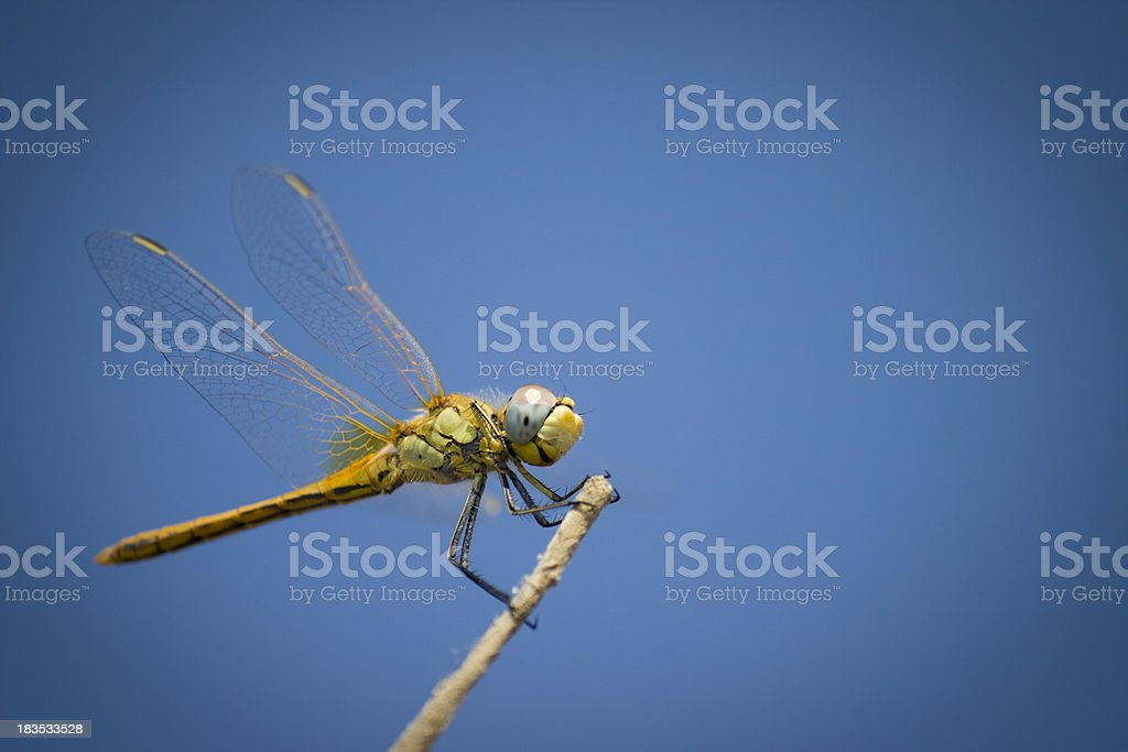 Dragonfly And Blue Sky stock photo
