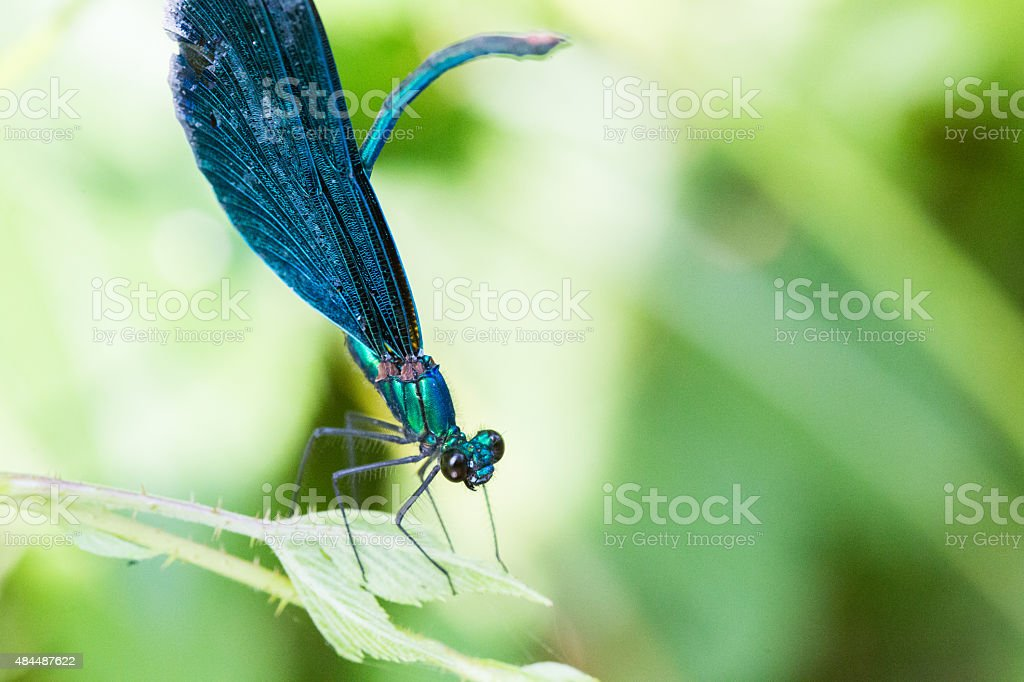 Dragonfly, blur background stock photo