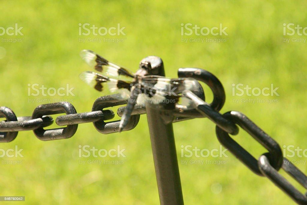Dragonfly Camourflage Fools Predators stock photo