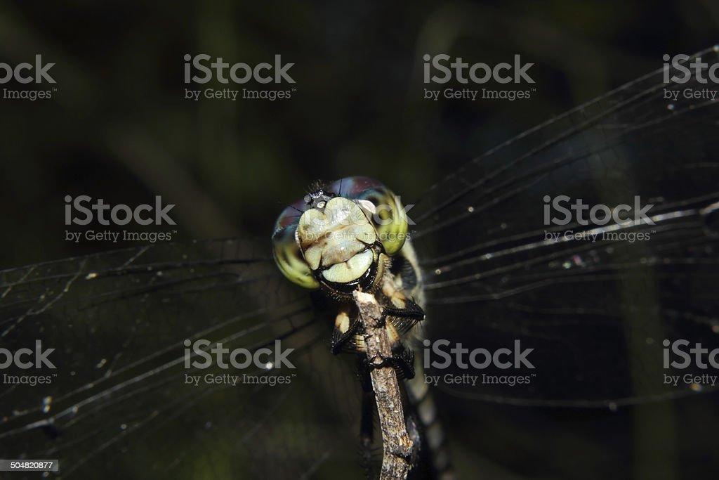 Dragonfly Closeup stock photo
