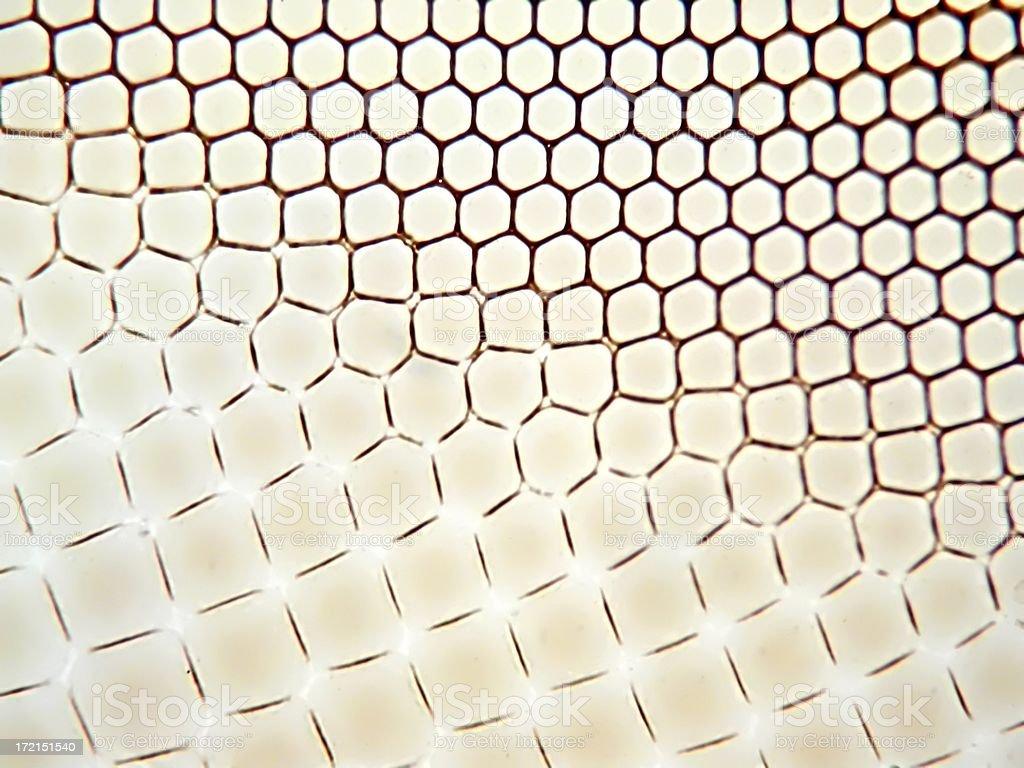 Dragonfly  eye under microscope stock photo