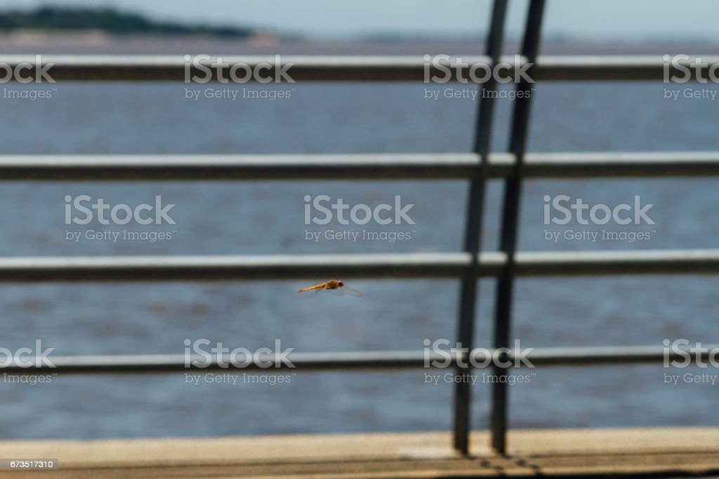 Dragonfly flying next to a river and a fence stock photo