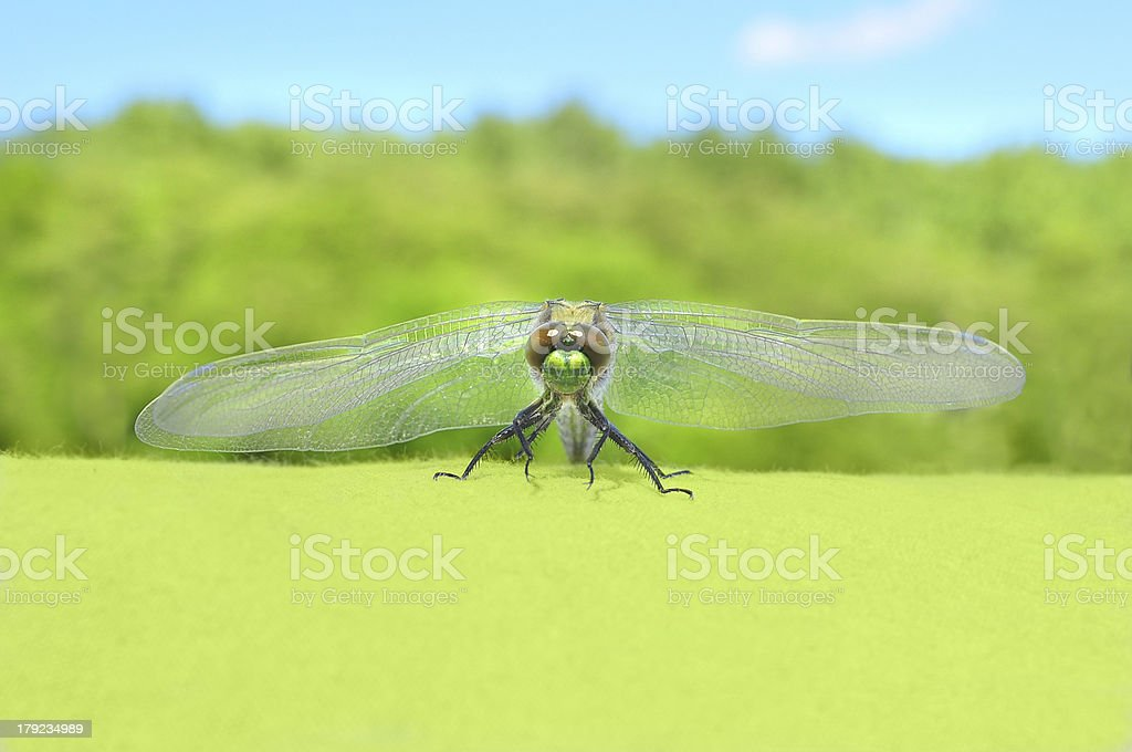 Dragonfly front royalty-free stock photo