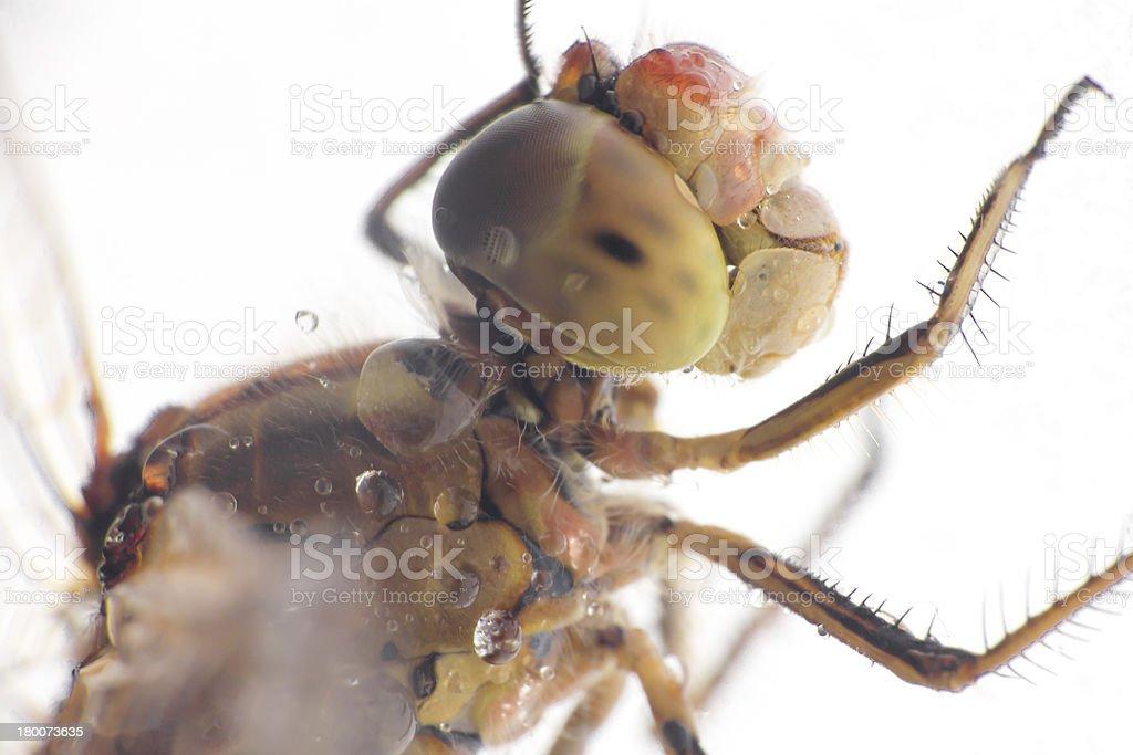 Dragonfly head stock photo