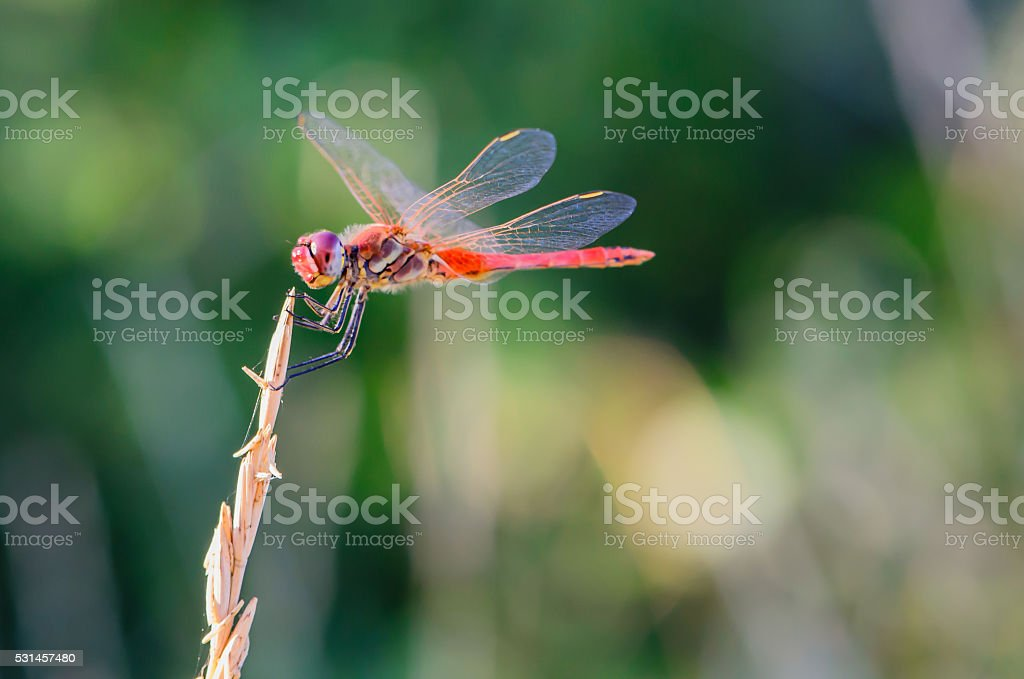 Dragonfly in balance stock photo