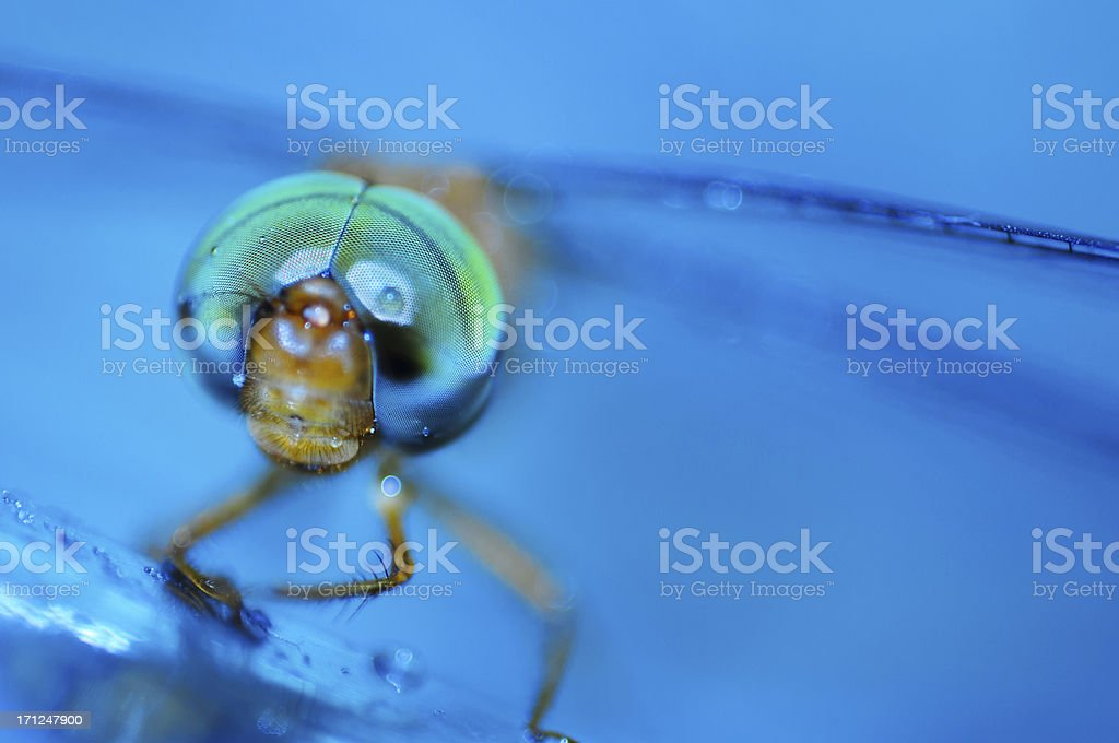 Dragonfly in blue water stock photo