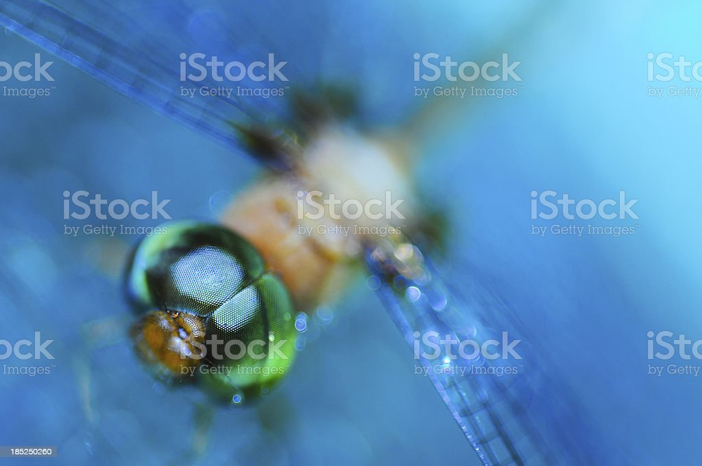 Dragonfly in blue water with bokah . royalty-free stock photo