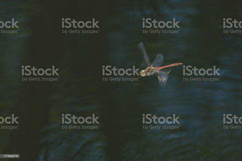 dragonfly in flight royalty-free stock photo