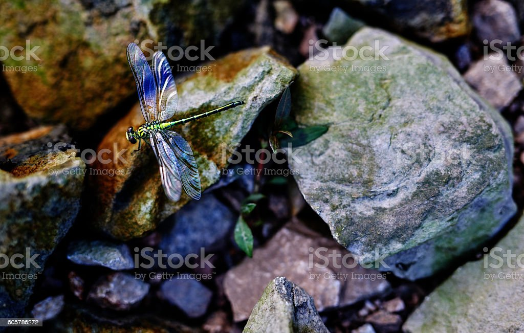 dragon-fly in nature stock photo