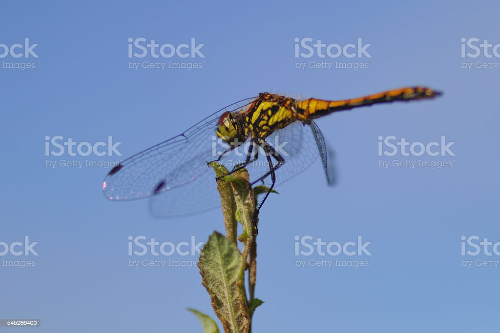 dragonfly in summer stock photo