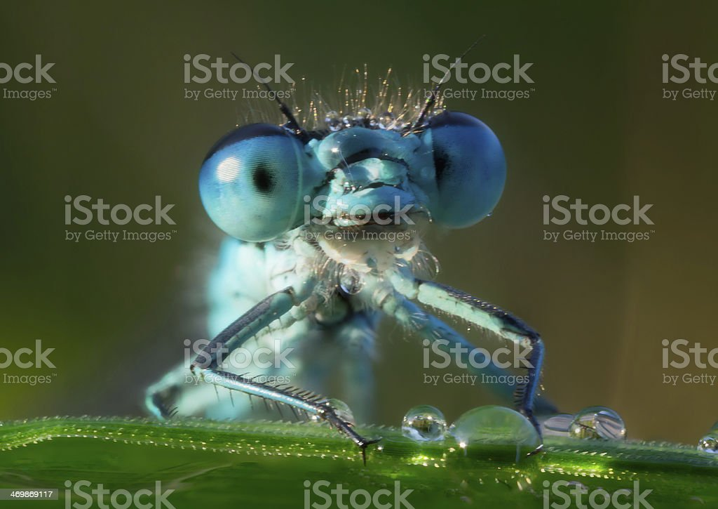 Dragonfly in the morning dew stock photo