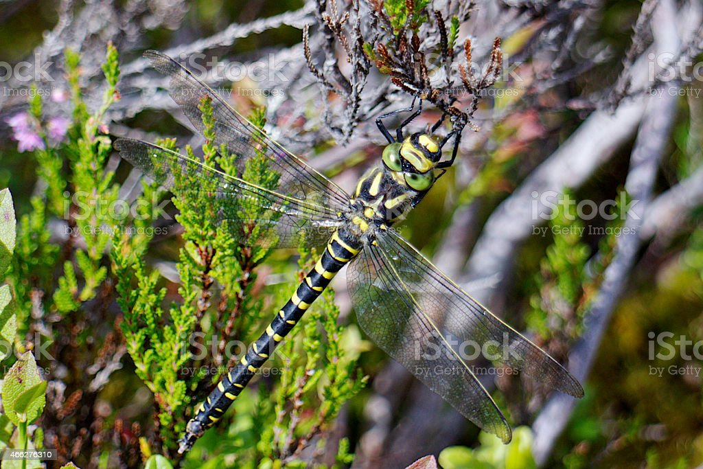 Dragonfly Insect stock photo