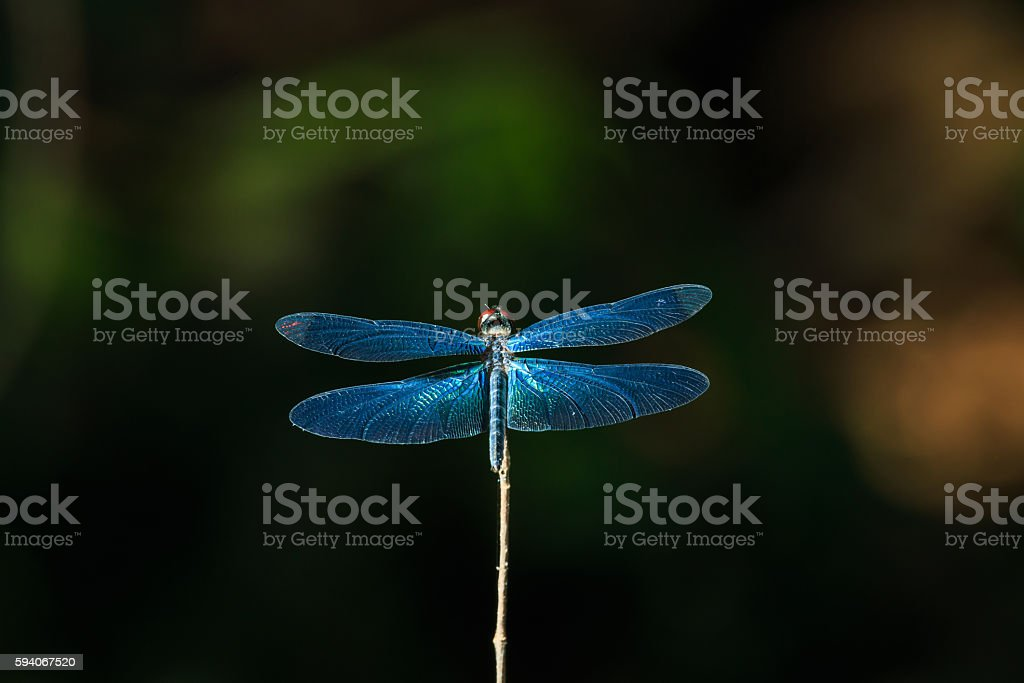 Dragonfly, insects, nature, stock photo