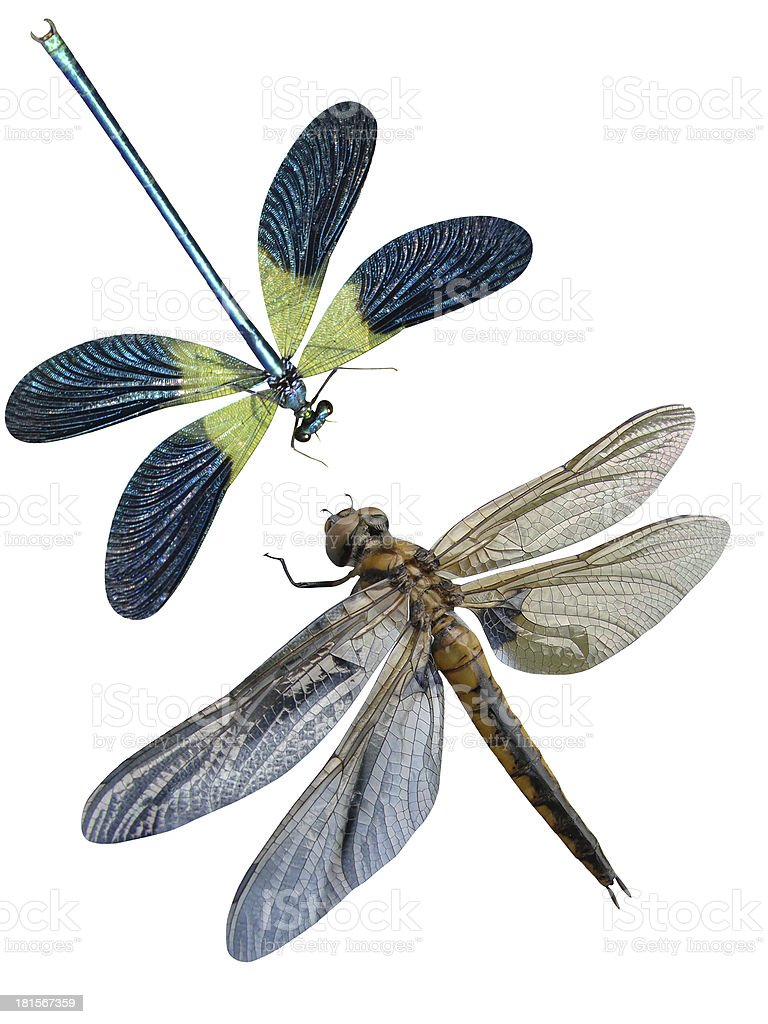 Dragonfly insects stock photo