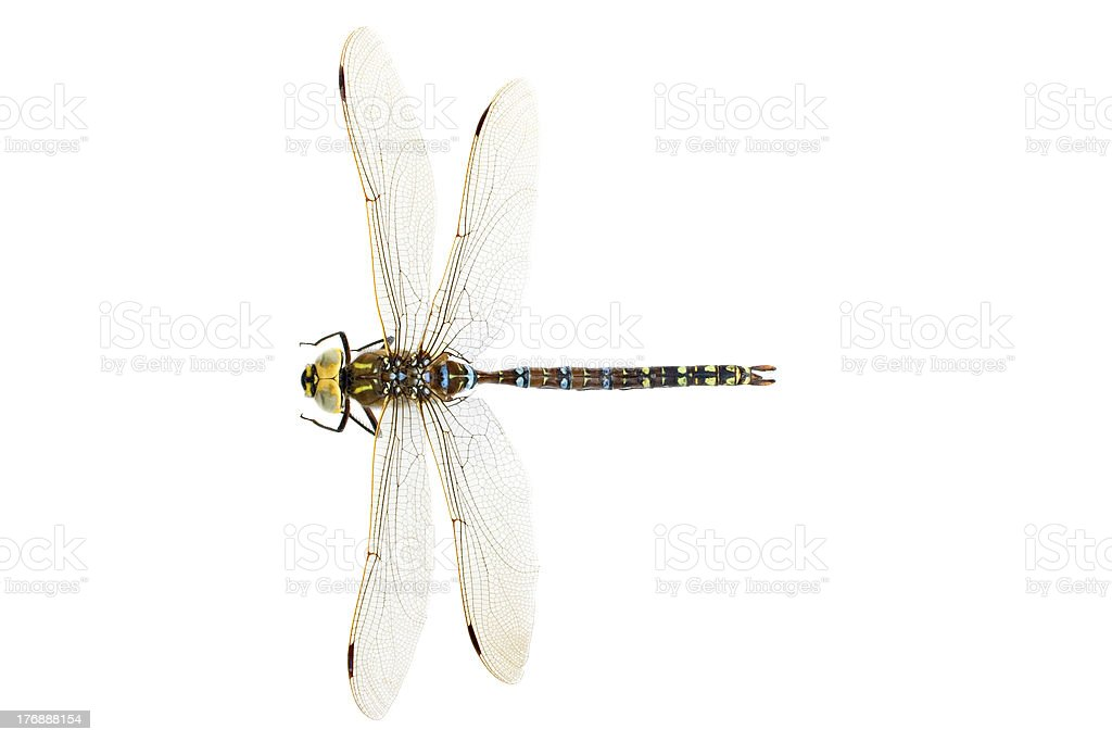Dragonfly , isolated on white royalty-free stock photo