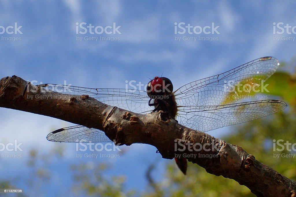 Dragonfly of autumn sky stock photo