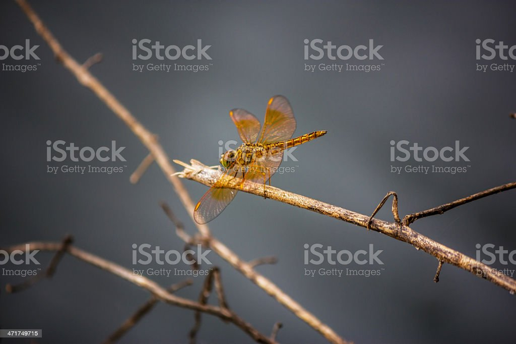 Dragonfly on a background stock photo