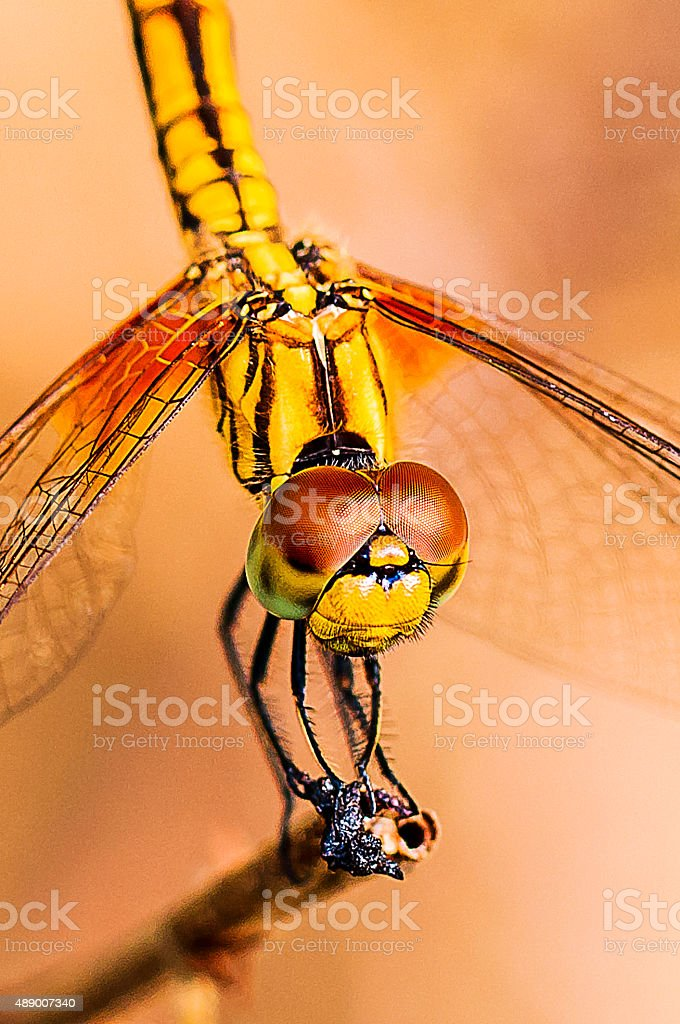 Dragonfly on a branch in a garden near the river stock photo