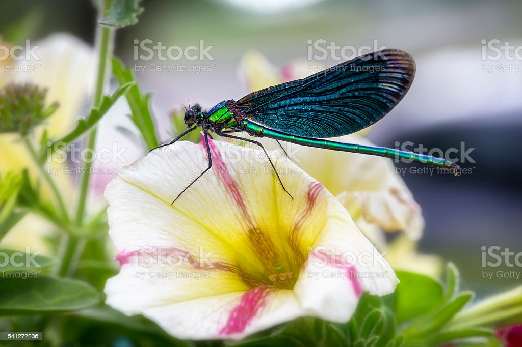 Dragonfly on a flower stock photo