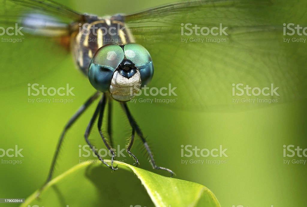 Dragonfly On A Leaf stock photo