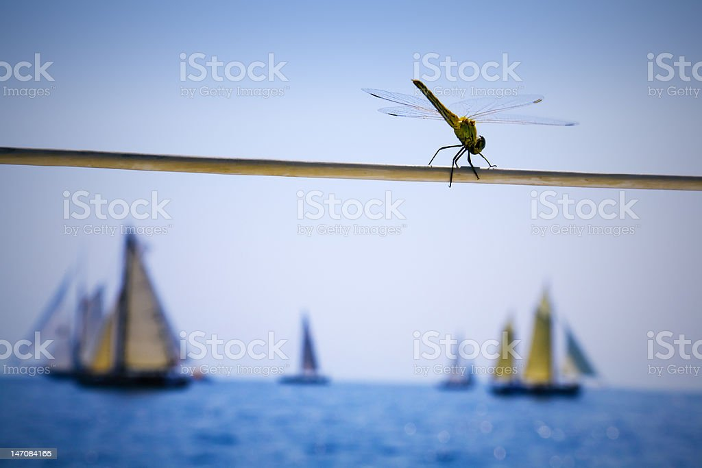 Dragonfly on a sailing boat royalty-free stock photo