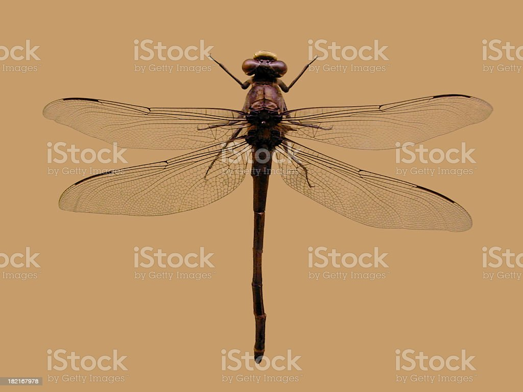 Dragonfly on brown background - 1600 x 1200 royalty-free stock photo