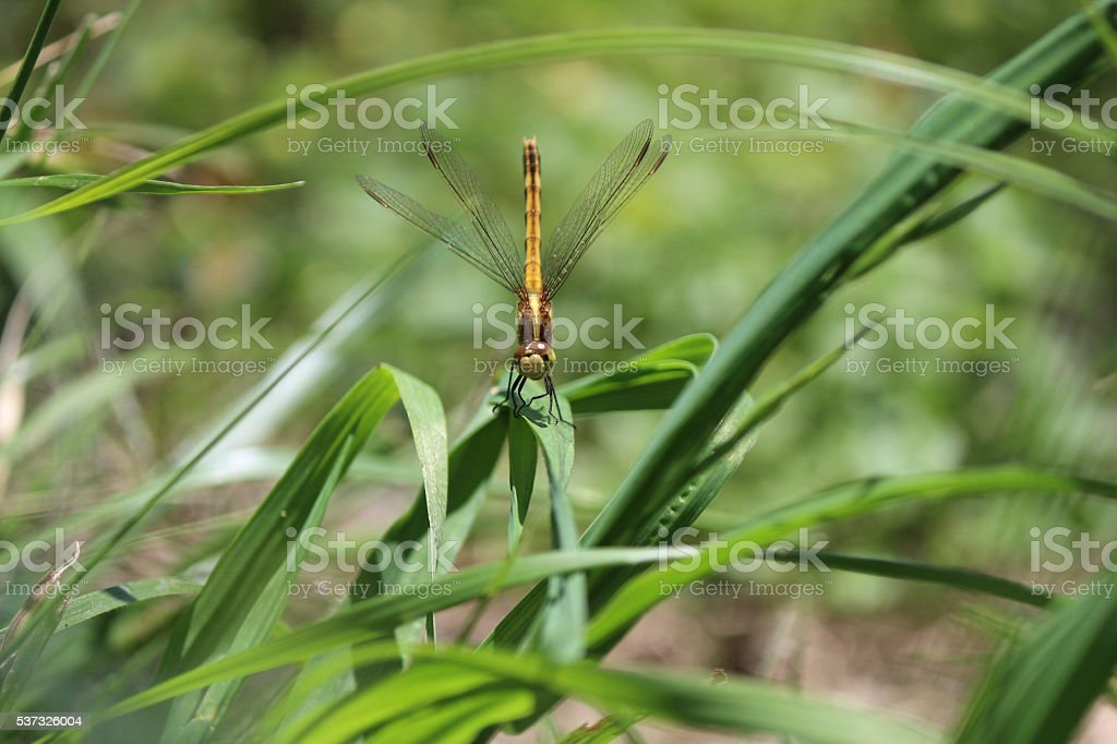 Dragonfly on nature stock photo