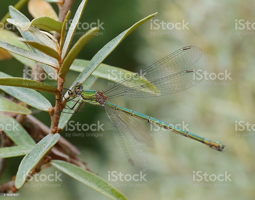 dragonfly on plant royalty-free stock photo
