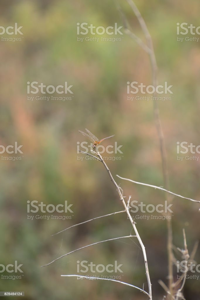 A dragonfly on the branch of tree stock photo